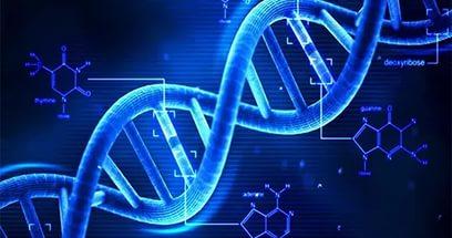 Экспертиза ДНК