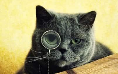 Частные детективы всего Мира